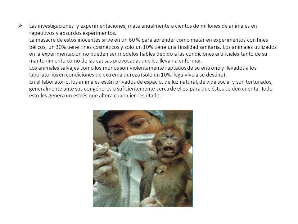 Las investigaciones y experimentaciones, mata anualmente a cientos de millones de animales en repetitivos y absurdos experimentos.