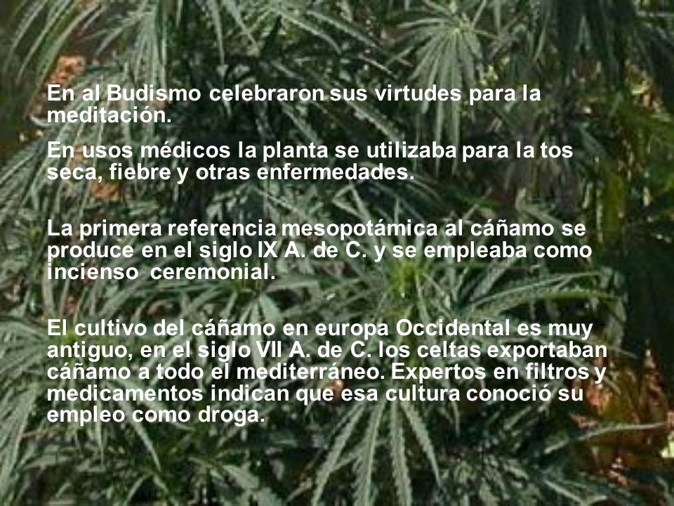 En al Budismo celebraron sus virtudes para la meditación.