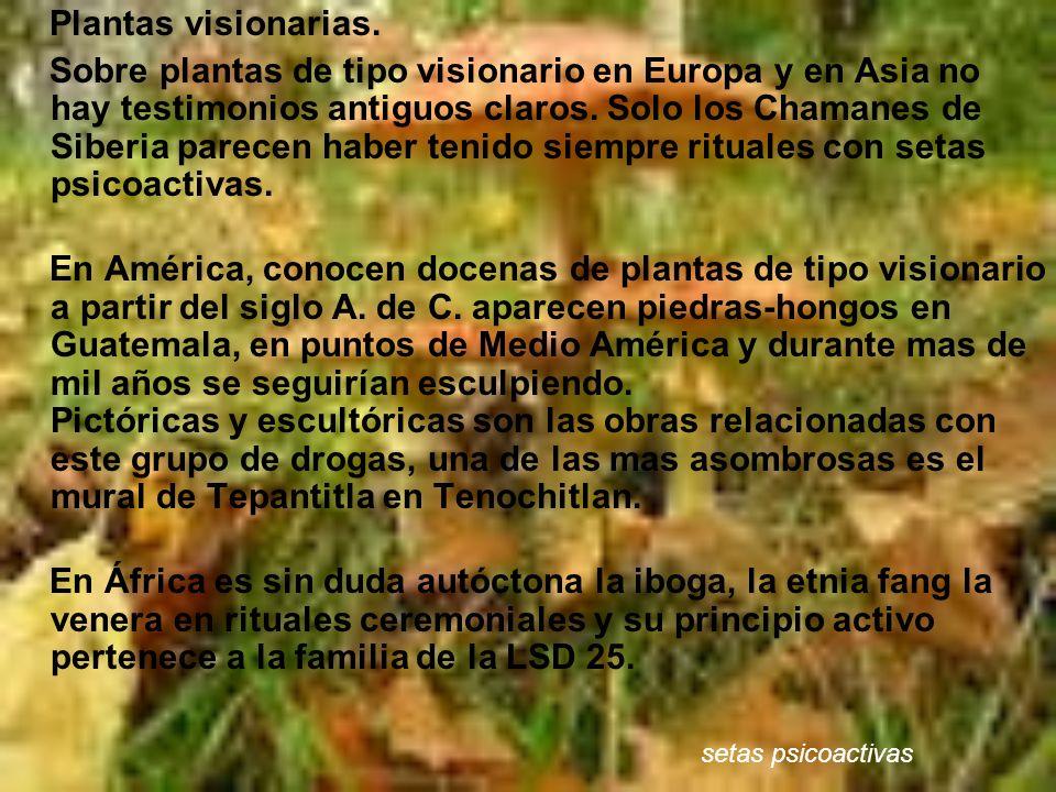 Plantas visionarias.