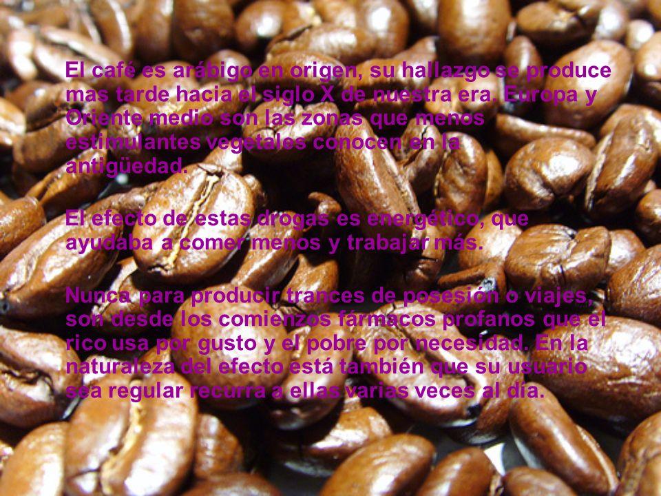 El café es arábigo en origen, su hallazgo se produce mas tarde hacia el siglo X de nuestra era. Europa y Oriente medio son las zonas que menos estimulantes vegetales conocen en la antigüedad.