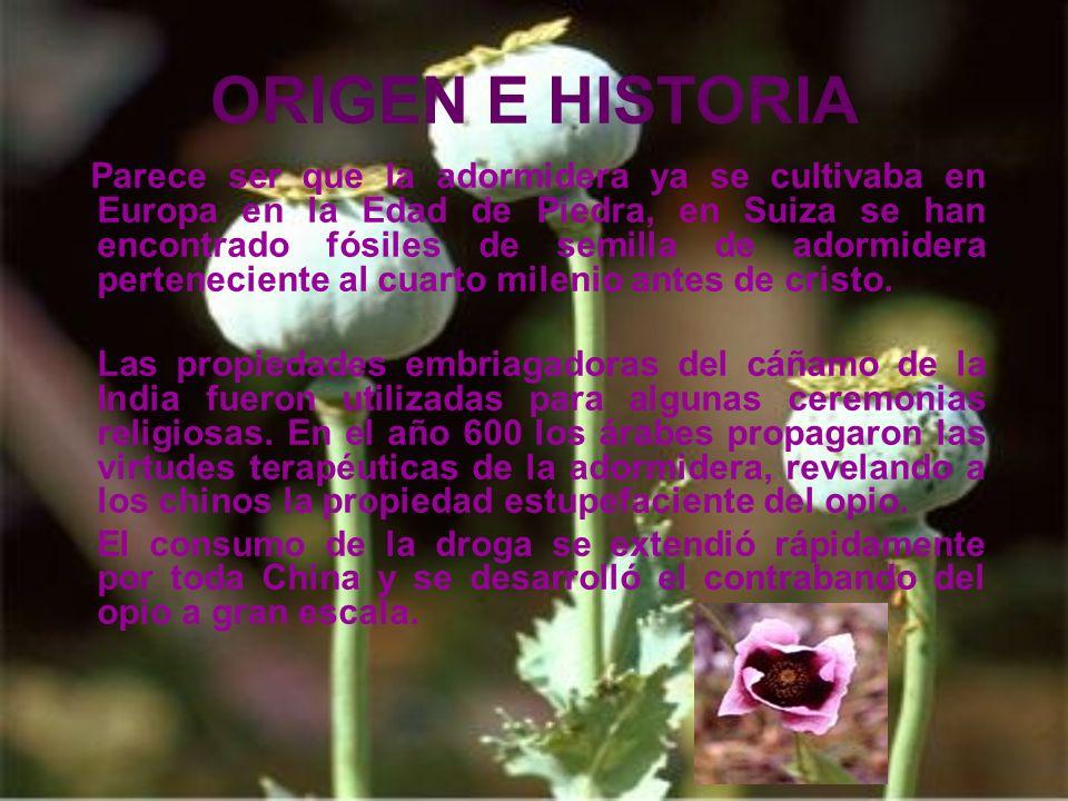 ORIGEN E HISTORIA