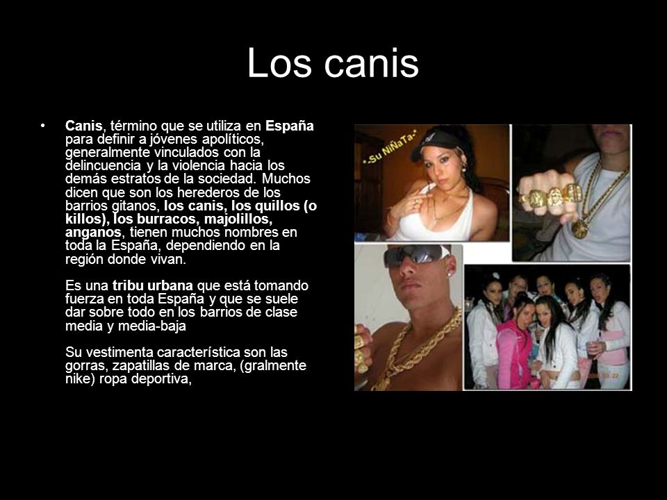 Los canis