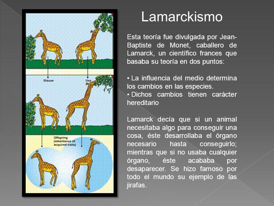 Lamarckismo Esta teoría fue divulgada por Jean-Baptiste de Monet, caballero de Lamarck, un científico frances que basaba su teoría en dos puntos: