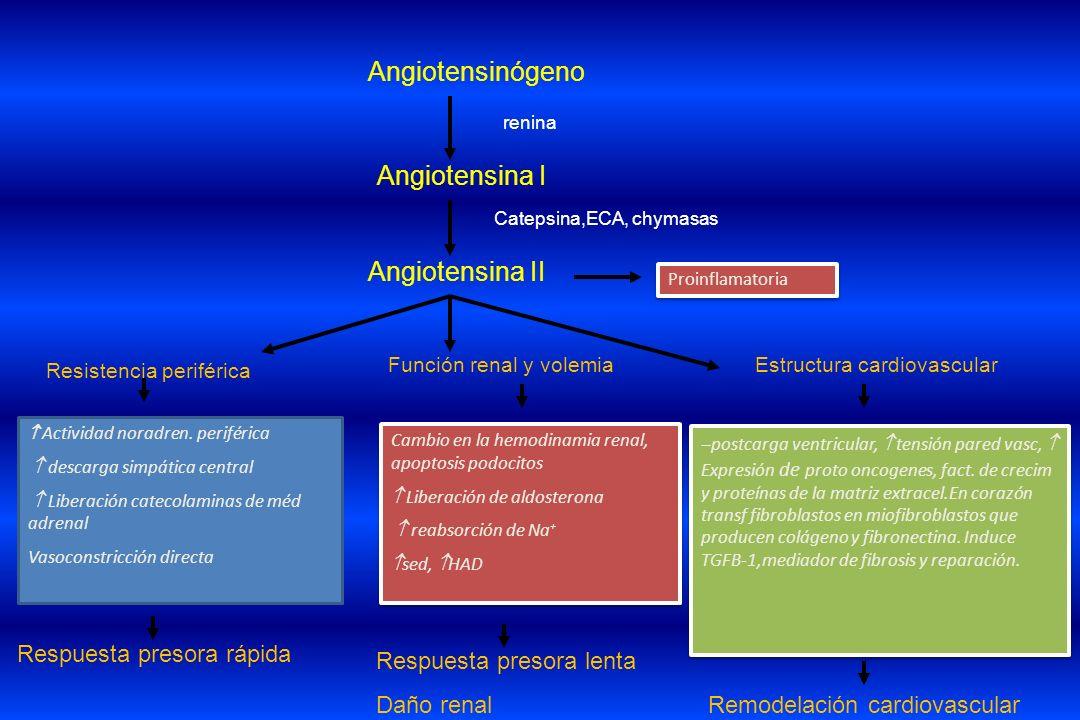 Angiotensinógeno Angiotensina I Angiotensina II