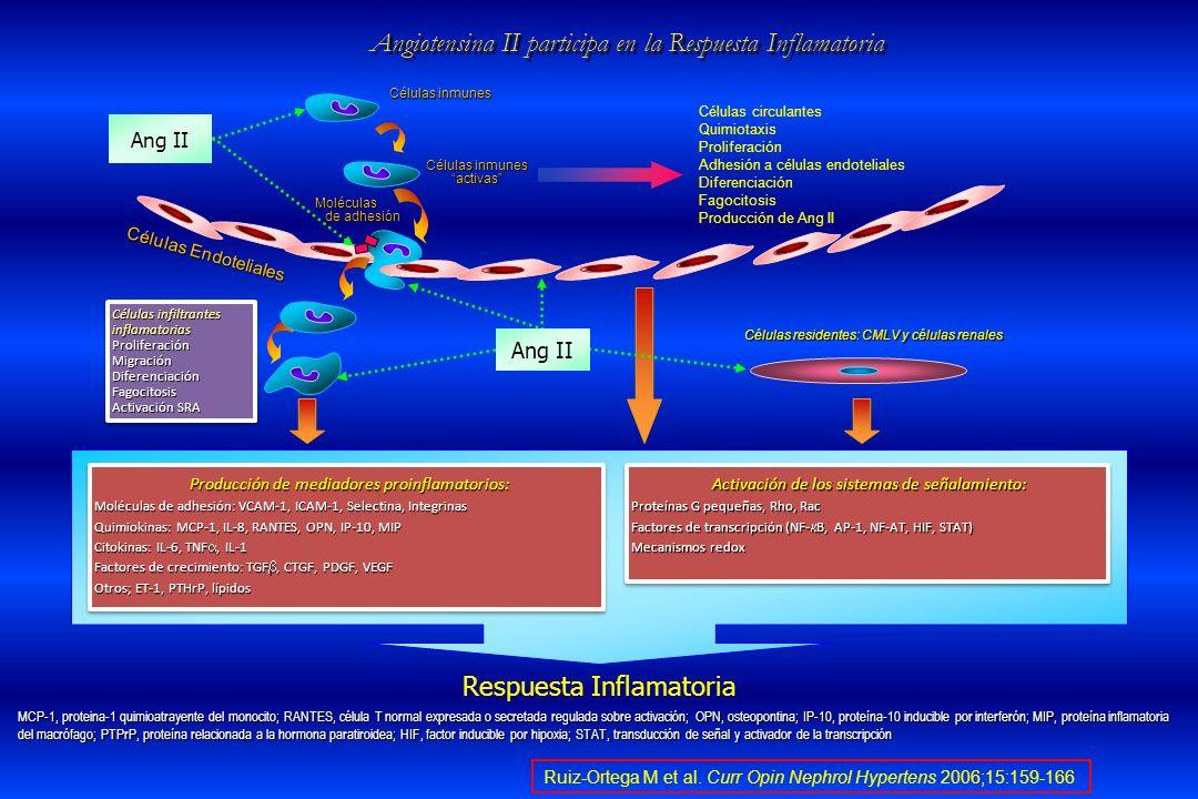 Angiotensina II participa en la Respuesta Inflamatoria