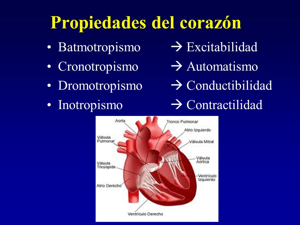 Propiedades del corazón