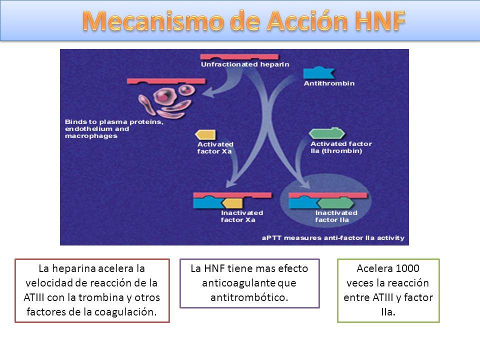 Mecanismo de Acción HNF