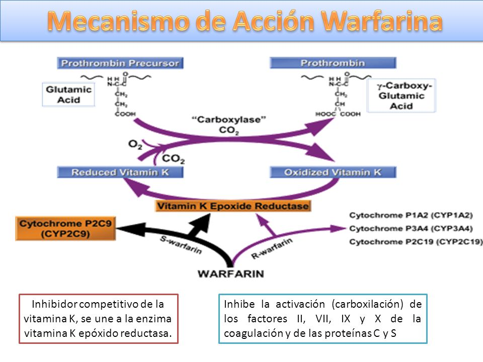 Mecanismo de Acción Warfarina
