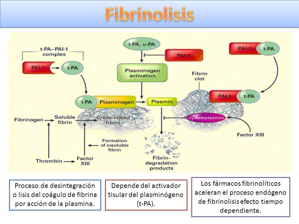 Depende del activador tisular del plasminógeno (t-PA).