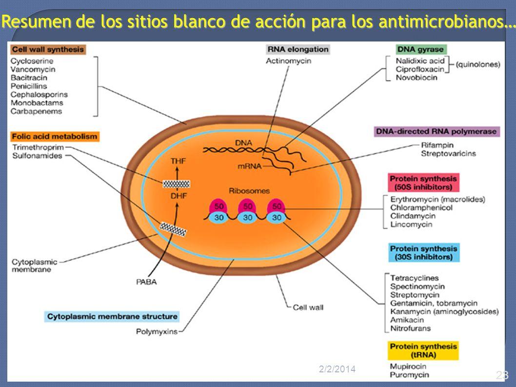 Resumen de los sitios blanco de acción para los antimicrobianos…