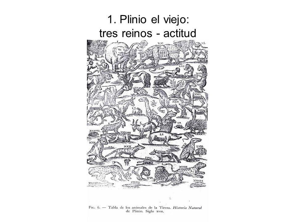 1. Plinio el viejo: tres reinos - actitud