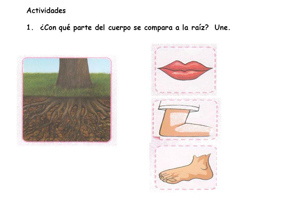 Actividades 1. ¿Con qué parte del cuerpo se compara a la raíz Une.