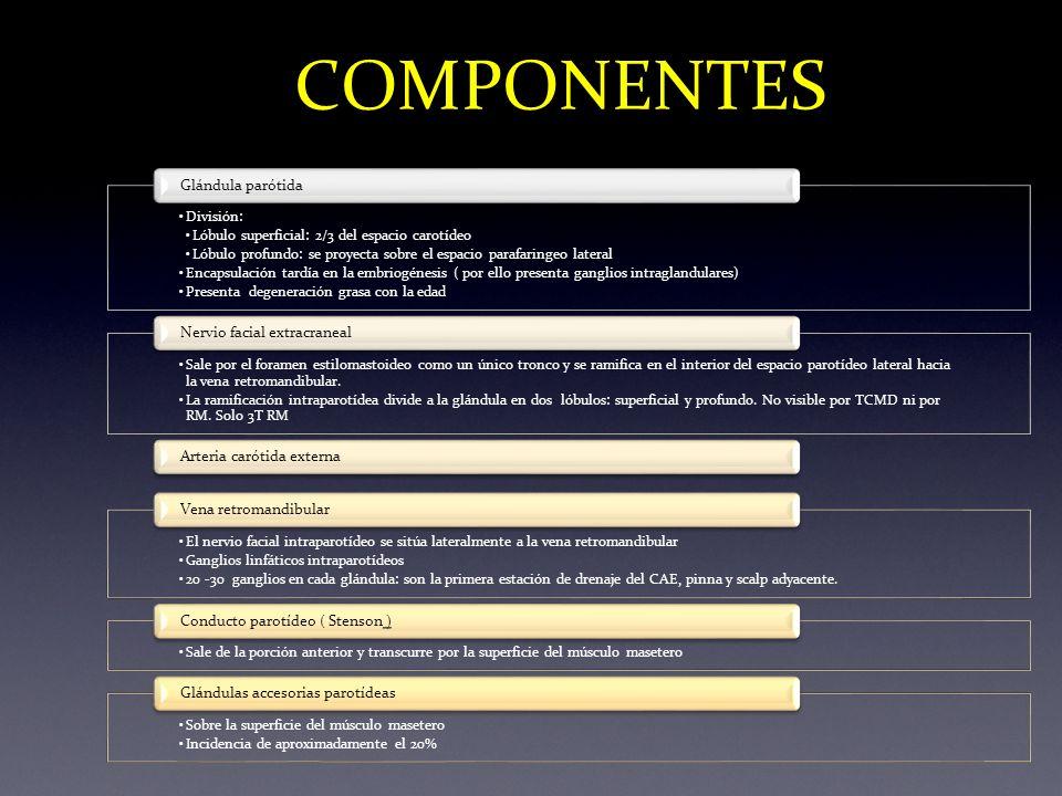 COMPONENTES Glándula parótida Nervio facial extracraneal