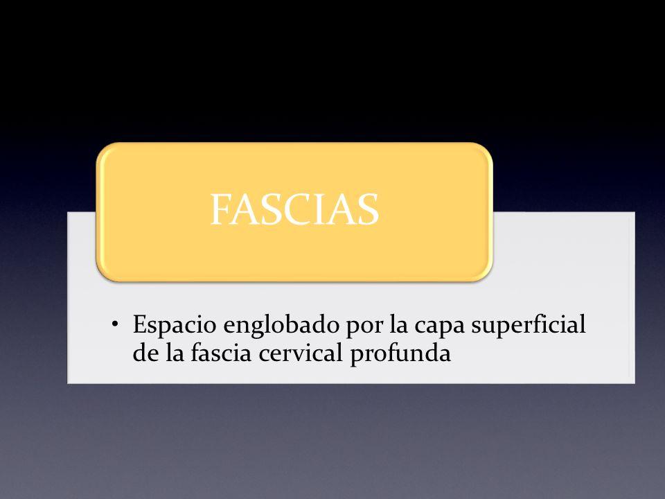 FASCIAS Espacio englobado por la capa superficial de la fascia cervical profunda