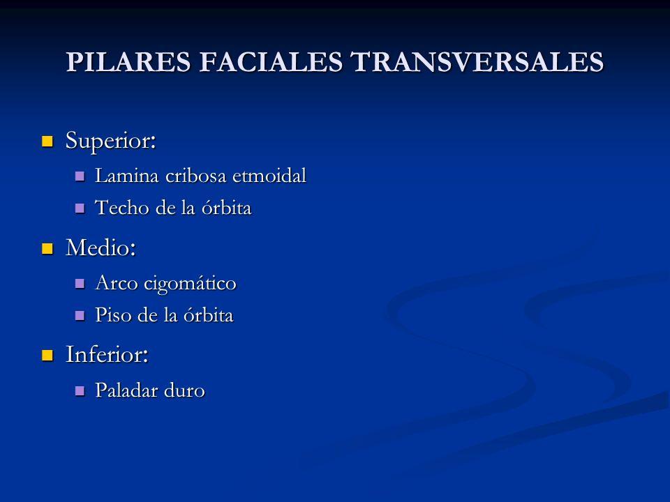 PILARES FACIALES TRANSVERSALES