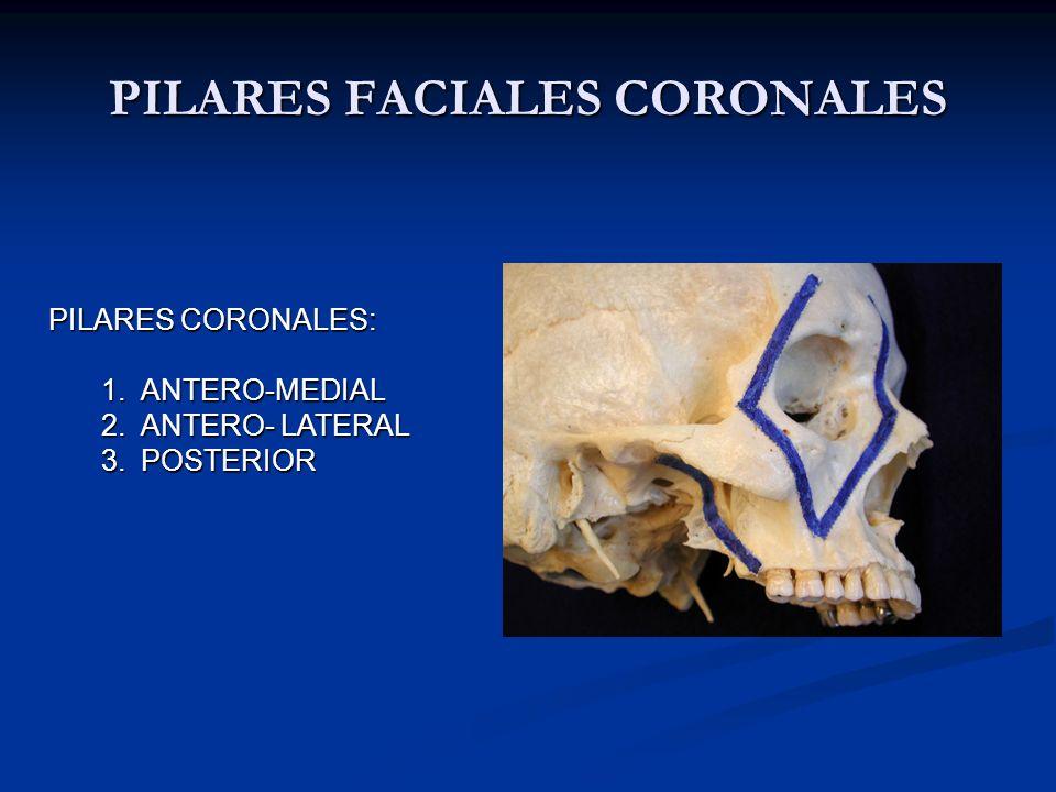 PILARES FACIALES CORONALES