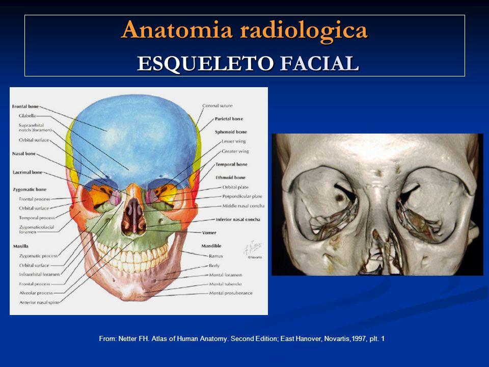 Anatomia radiologica ESQUELETO FACIAL