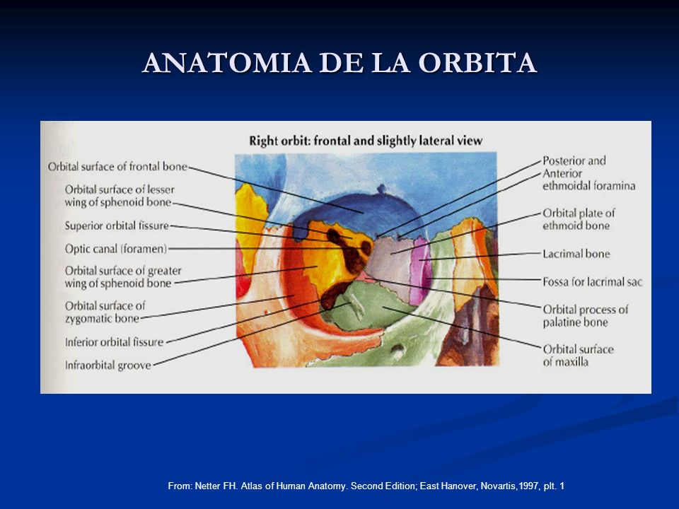 ANATOMIA DE LA ORBITA From: Netter FH. Atlas of Human Anatomy.