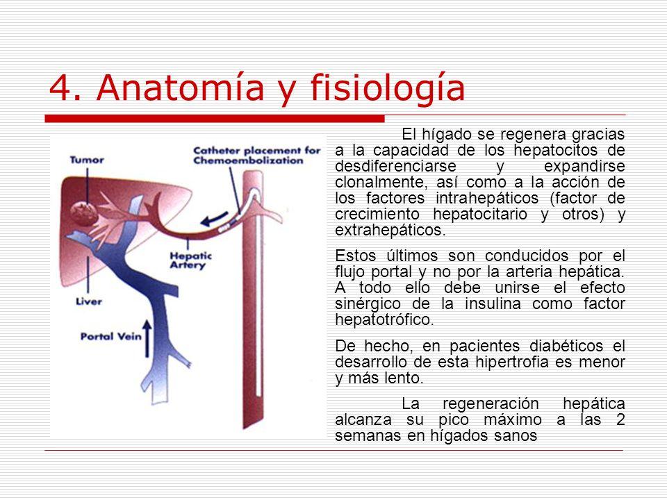 4. Anatomía y fisiología