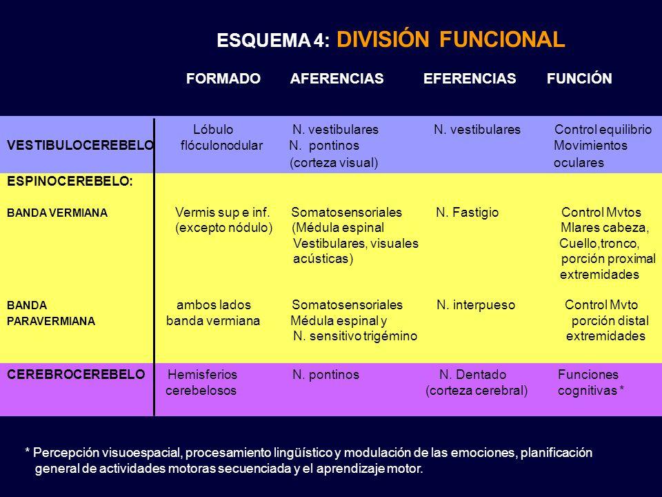 ESQUEMA 4: DIVISIÓN FUNCIONAL