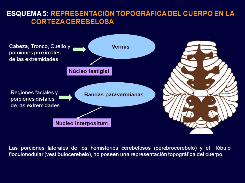 ESQUEMA 5: REPRESENTACIÓN TOPOGRÁFICA DEL CUERPO EN LA