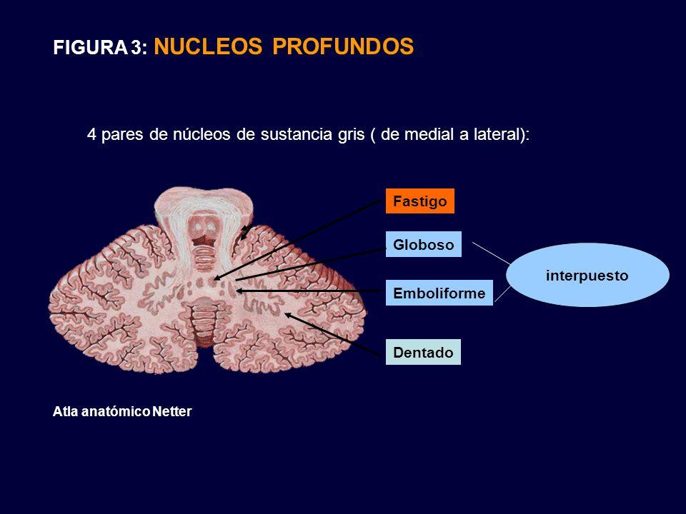 FIGURA 3: NUCLEOS PROFUNDOS