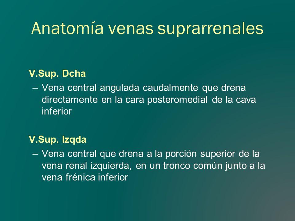 Anatomía venas suprarrenales