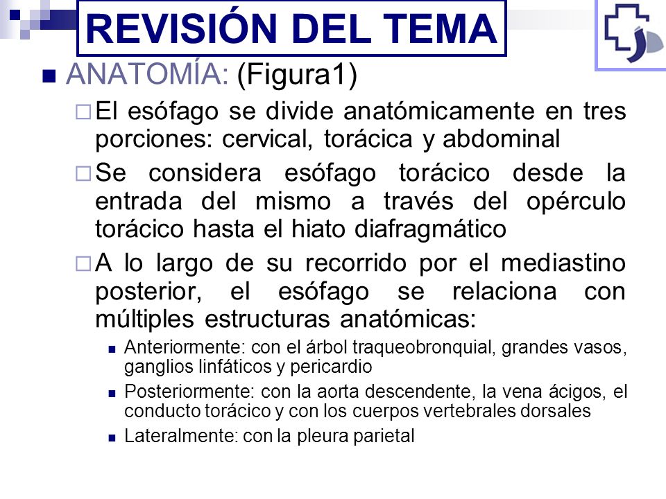 REVISIÓN DEL TEMA ANATOMÍA: (Figura1)