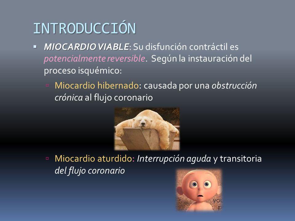 INTRODUCCIÓN MIOCARDIO VIABLE: Su disfunción contráctil es potencialmente reversible. Según la instauración del proceso isquémico: