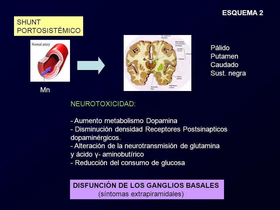 ESQUEMA 2 SHUNT. PORTOSISTÉMICO. Pálido. Putamen. Caudado. Sust. negra. Mn. NEUROTOXICIDAD: Aumento metabolismo Dopamina.