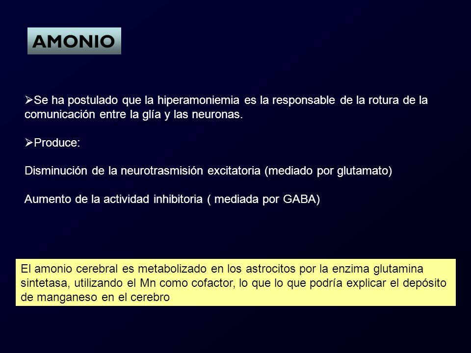 AMONIO Se ha postulado que la hiperamoniemia es la responsable de la rotura de la comunicación entre la glía y las neuronas.