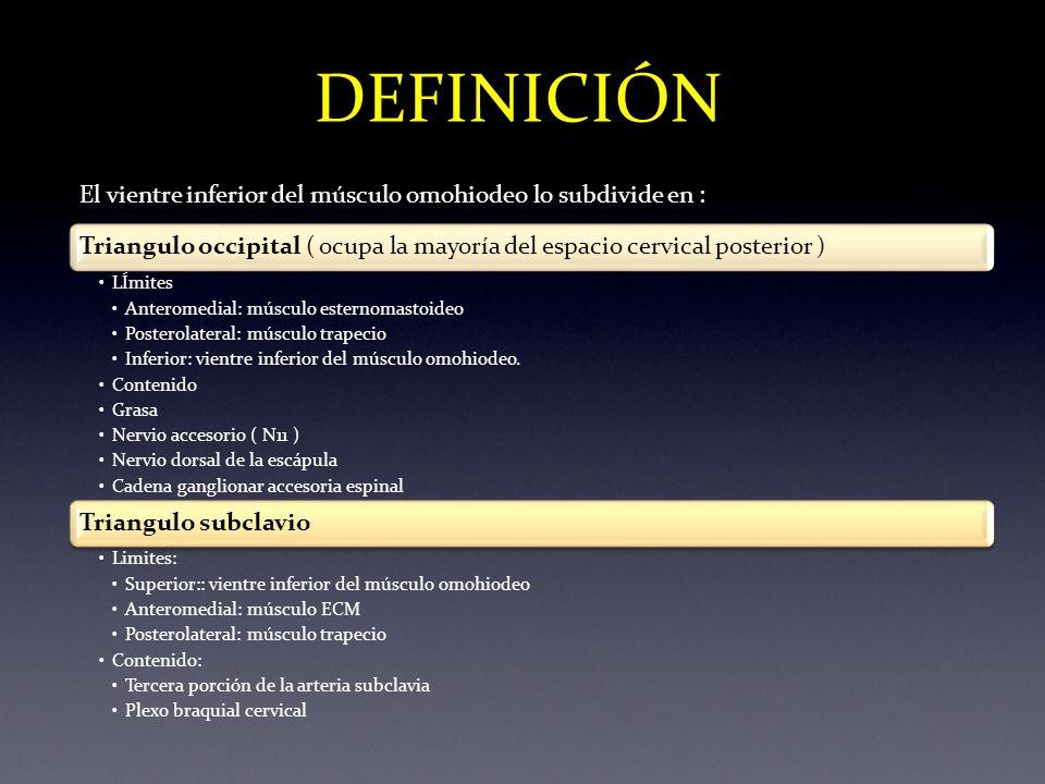 Lujoso Definición De Dorsal En La Anatomía Imágenes - Imágenes de ...