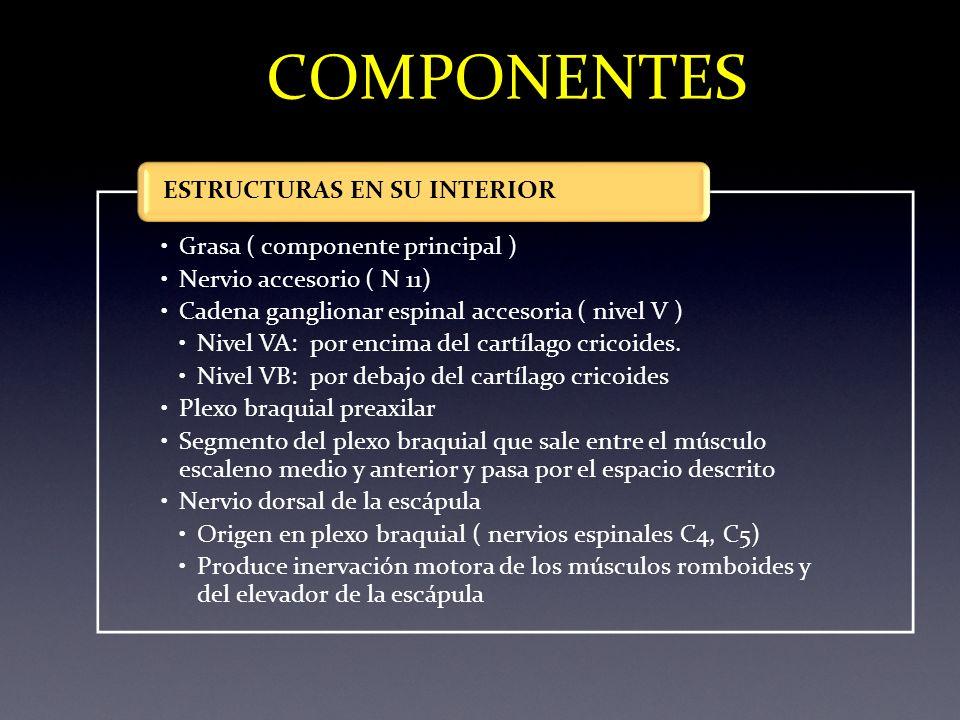 COMPONENTES ESTRUCTURAS EN SU INTERIOR Grasa ( componente principal )
