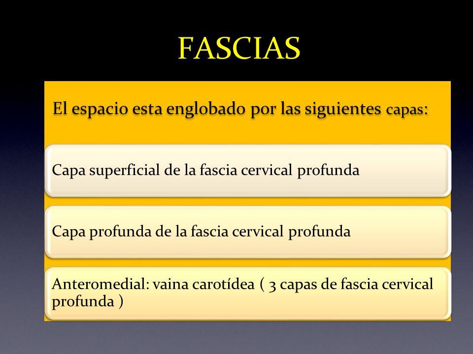 FASCIAS El espacio esta englobado por las siguientes capas: