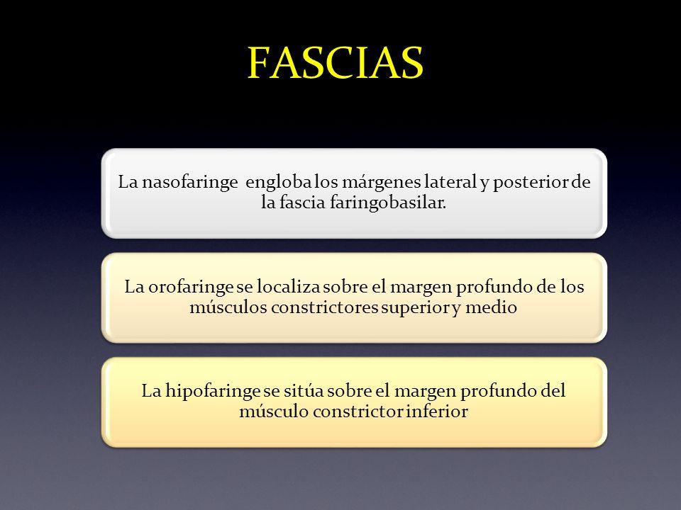 FASCIAS La nasofaringe engloba los márgenes lateral y posterior de la fascia faringobasilar.