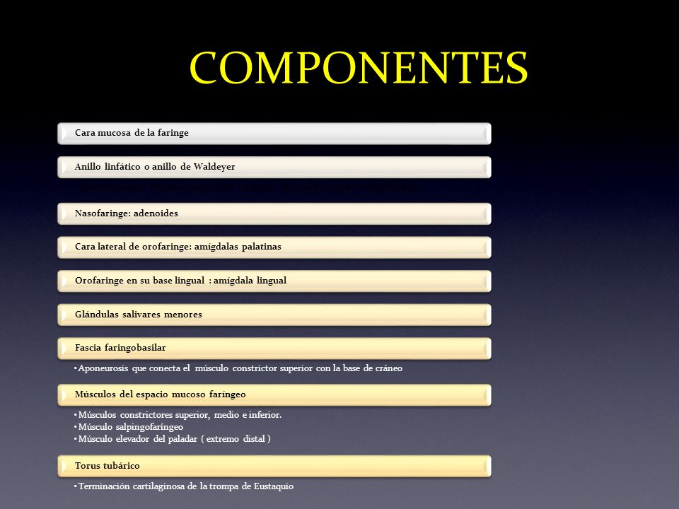 COMPONENTES Nasofaringe: adenoides Cara mucosa de la faringe