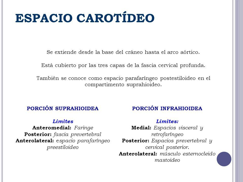 ESPACIO CAROTÍDEO Se extiende desde la base del cráneo hasta el arco aórtico. Está cubierto por las tres capas de la fascia cervical profunda.