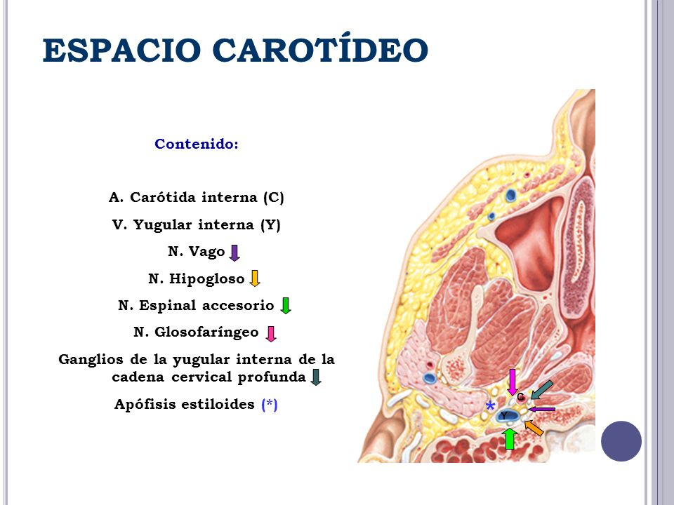 ESPACIO CAROTÍDEO * Contenido: A. Carótida interna (C)