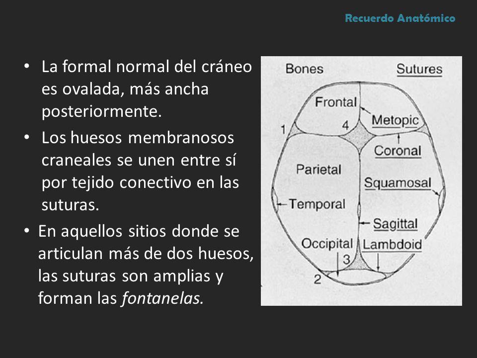 La formal normal del cráneo es ovalada, más ancha posteriormente.