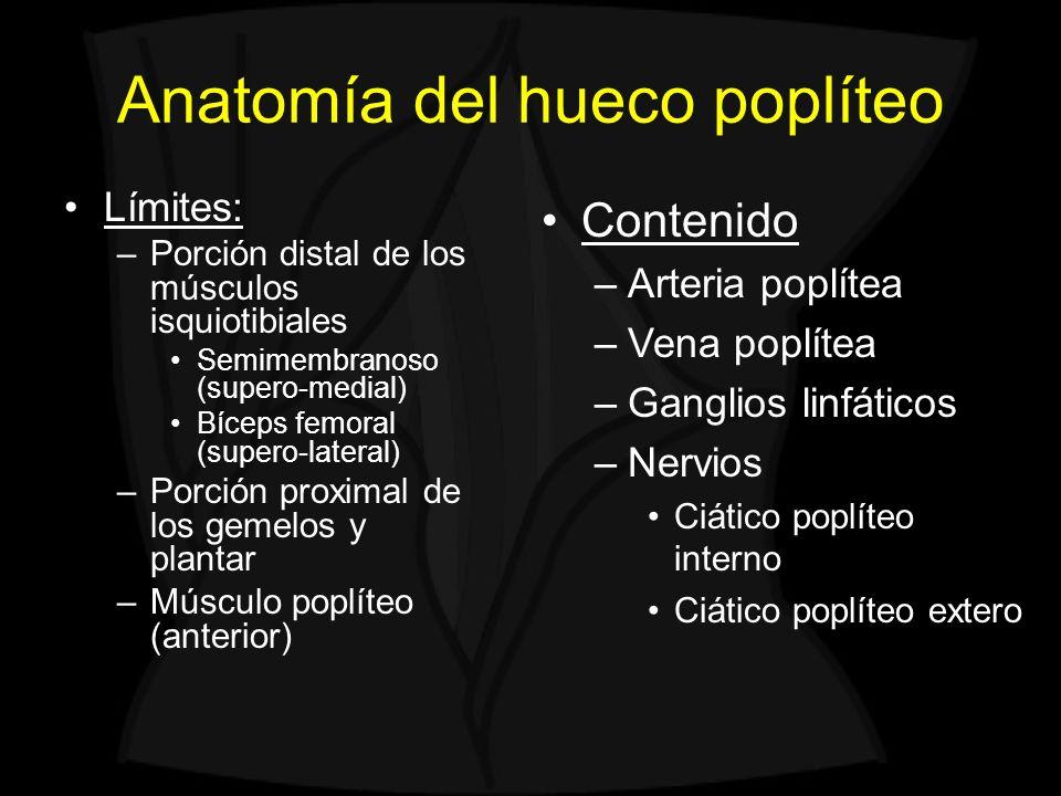 Anatomía del hueco poplíteo