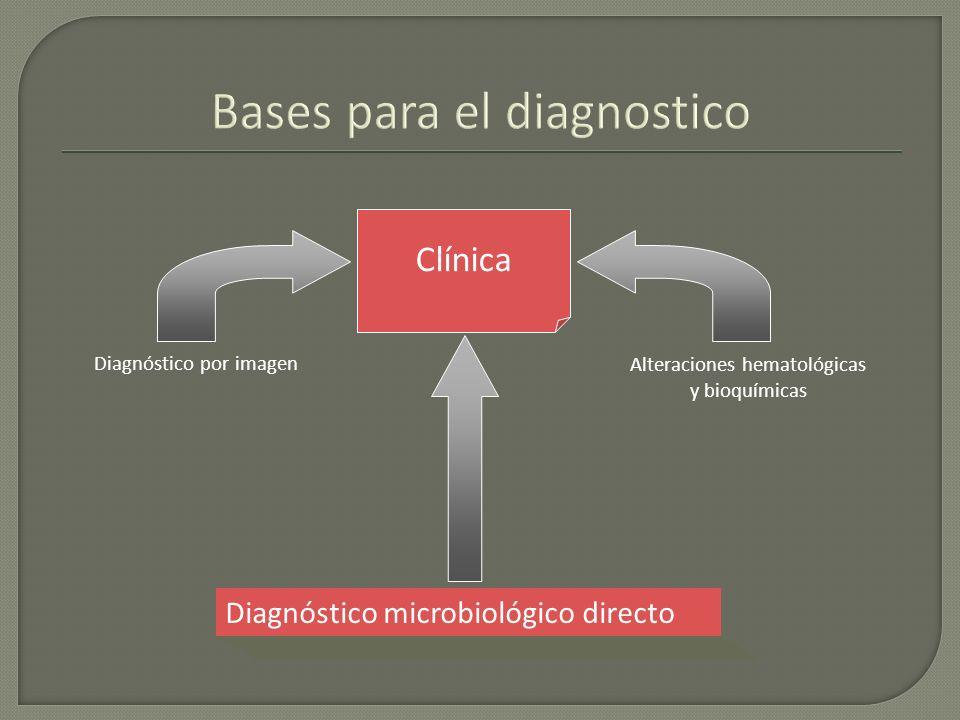 Bases para el diagnostico