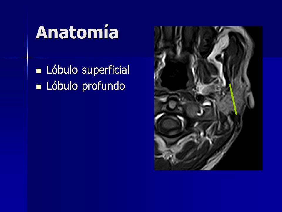 Anatomía Lóbulo superficial Lóbulo profundo