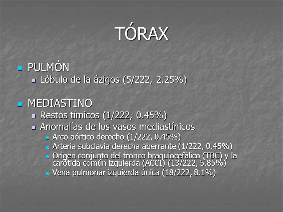 TÓRAX PULMÓN MEDIASTINO Lóbulo de la ázigos (5/222, 2.25%)