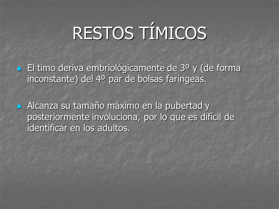 RESTOS TÍMICOS El timo deriva embriológicamente de 3º y (de forma inconstante) del 4º par de bolsas faríngeas.