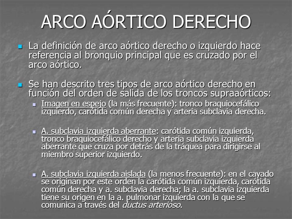 ARCO AÓRTICO DERECHO La definición de arco aórtico derecho o izquierdo hace referencia al bronquio principal que es cruzado por el arco aórtico.