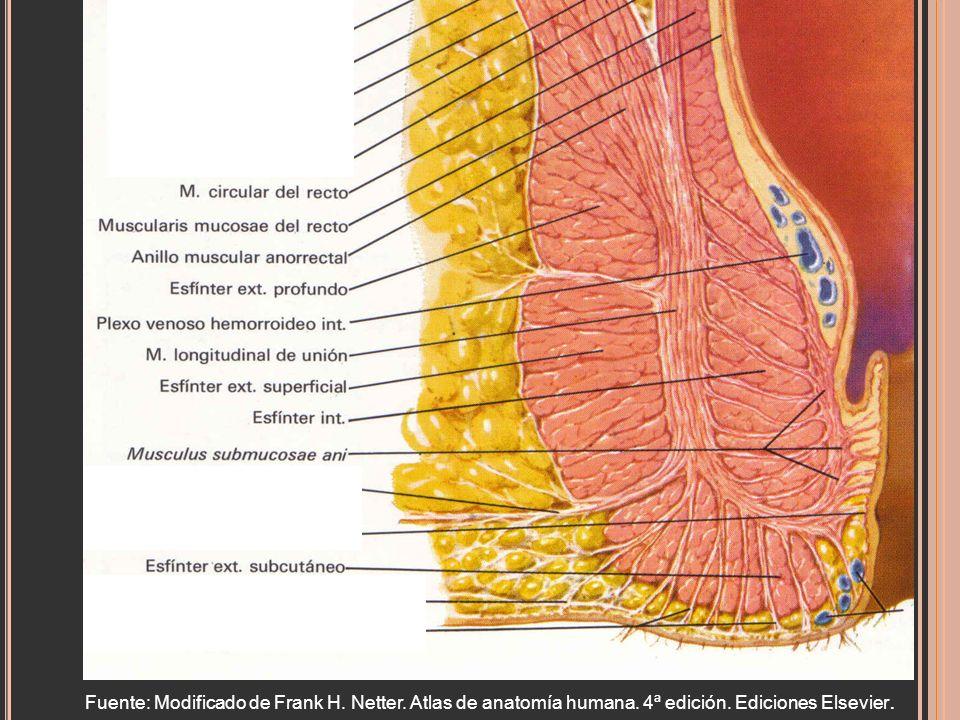 Fuente: Modificado de Frank H. Netter. Atlas de anatomía humana