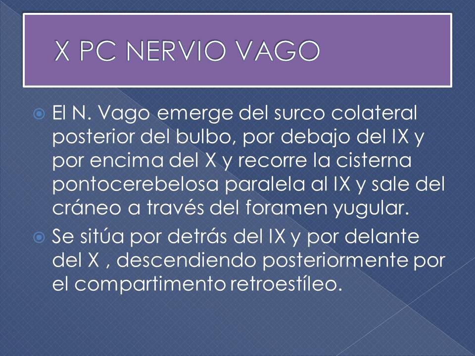 X PC NERVIO VAGO