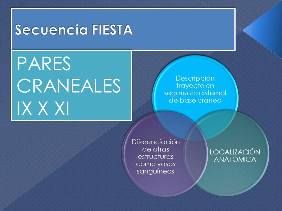 PARES CRANEALES IX X XI Secuencia FIESTA