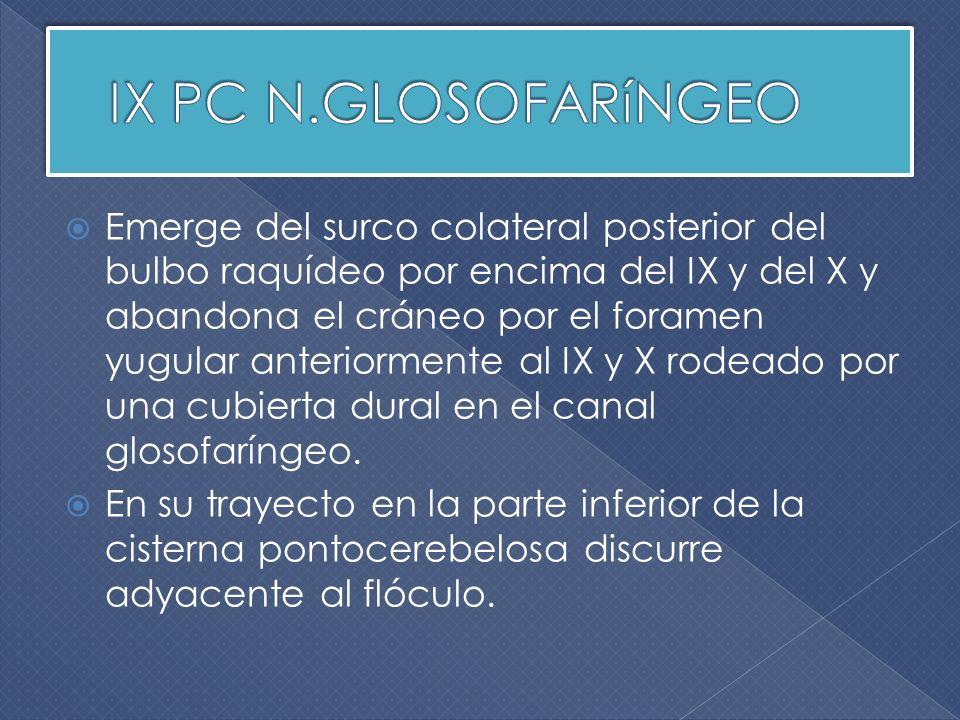 IX PC N.GLOSOFARíNGEO