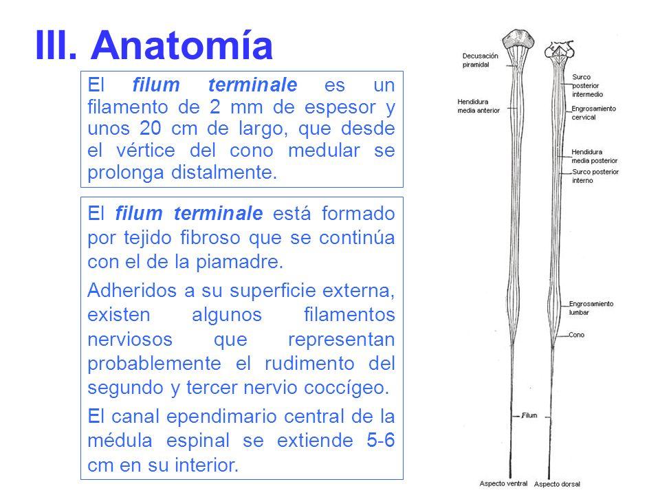 III. Anatomía